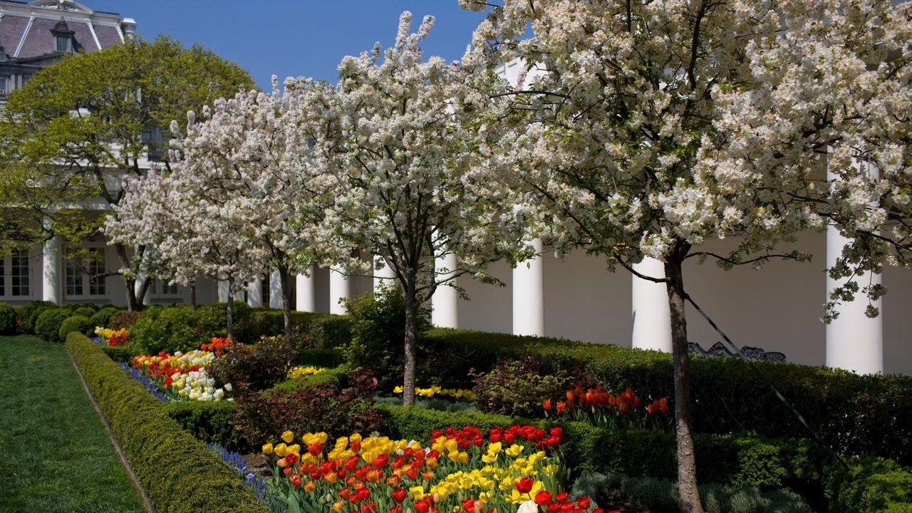 Melania Trump Announces Plans to Renovate White House Rose