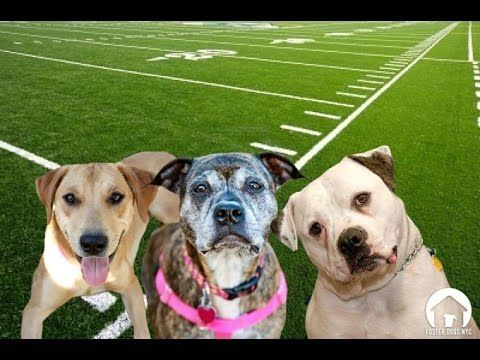 Animals Playing Nfl Football