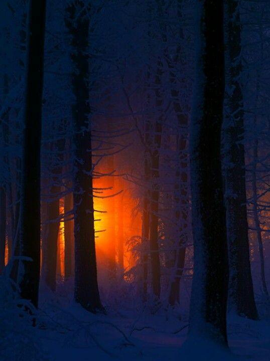 Photo of Winterwald