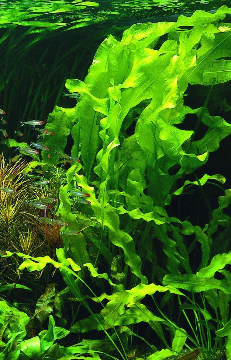 водоросли - Поиск в Google