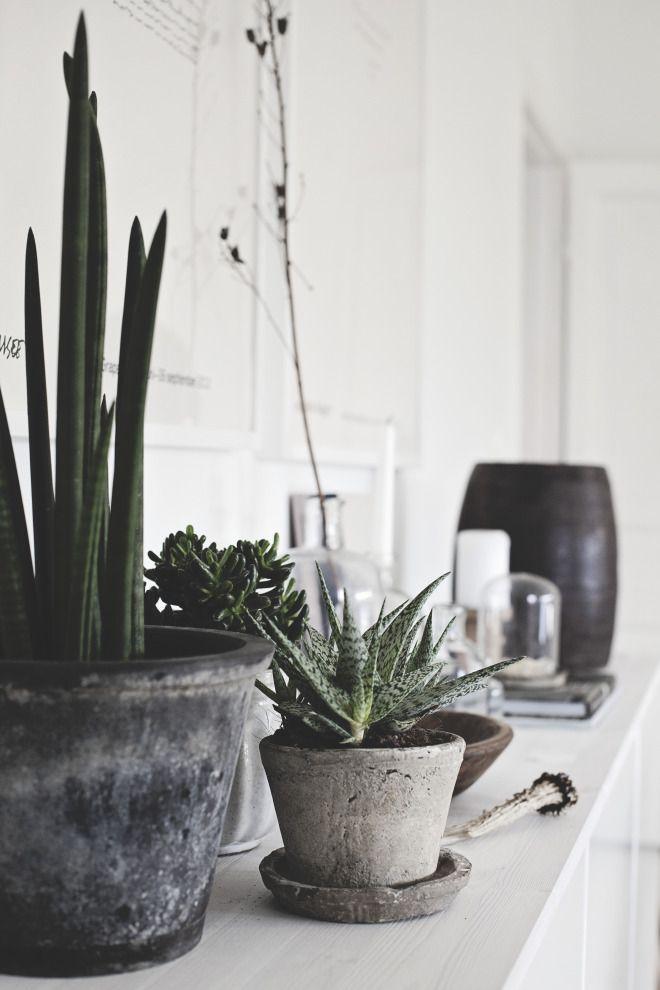 x #plant #flower #garden x Pinterest : @s_dele