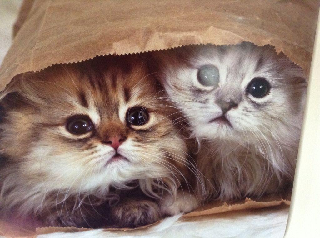 Baged kitten's