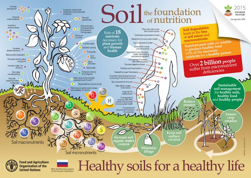 Our soils are by nature linked to the micronutrient