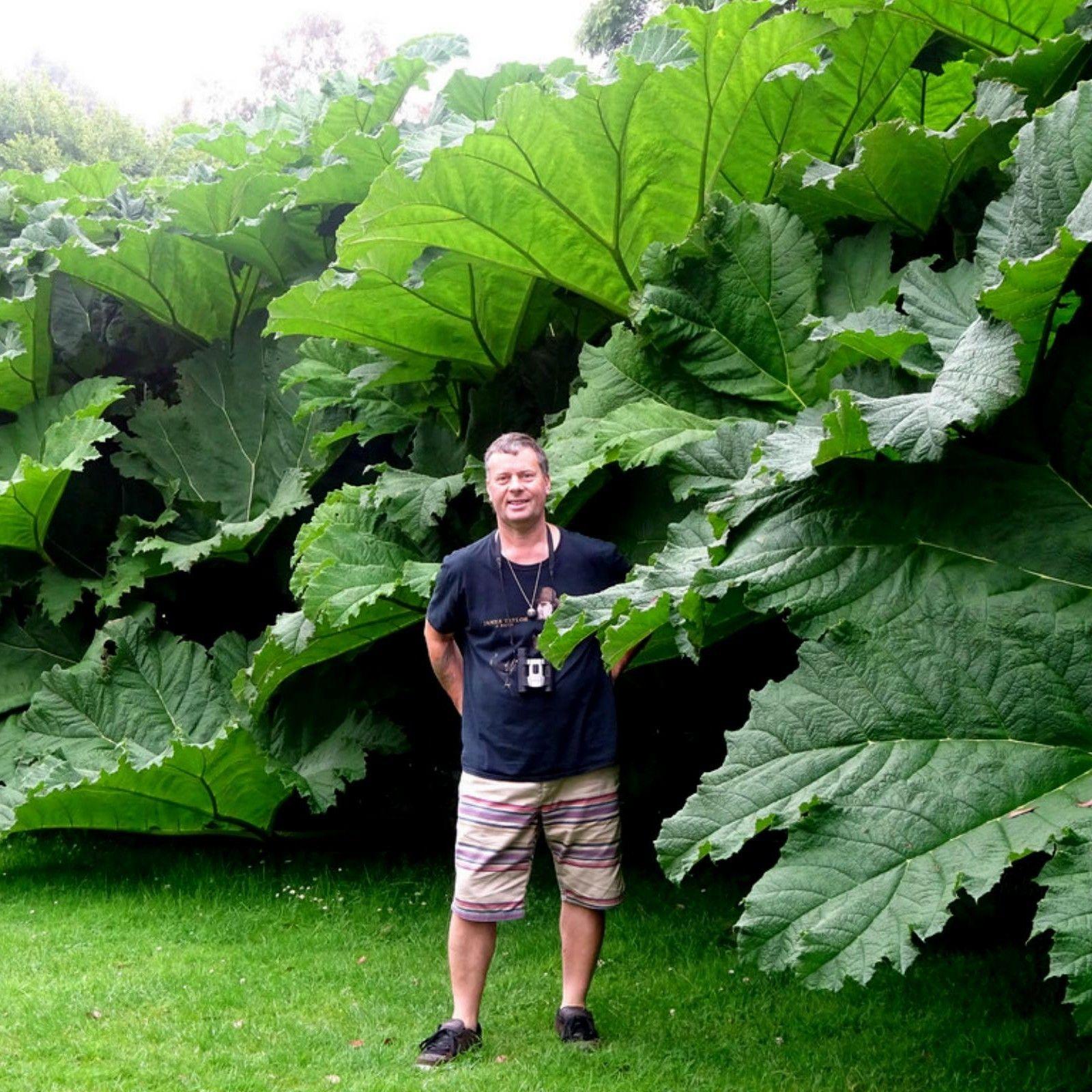 Rhubarb Companion Plants: Pin On Gardens