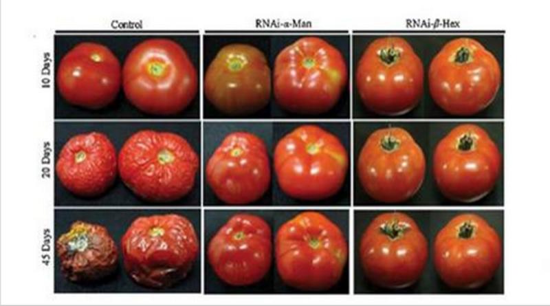 Screenshot 1 Genetically Modified Food Gmo Foods Organic Recipes