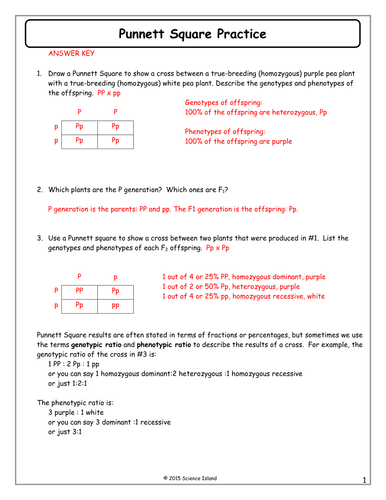 7 Punnett Square Practice Answer Key Docx Genetics