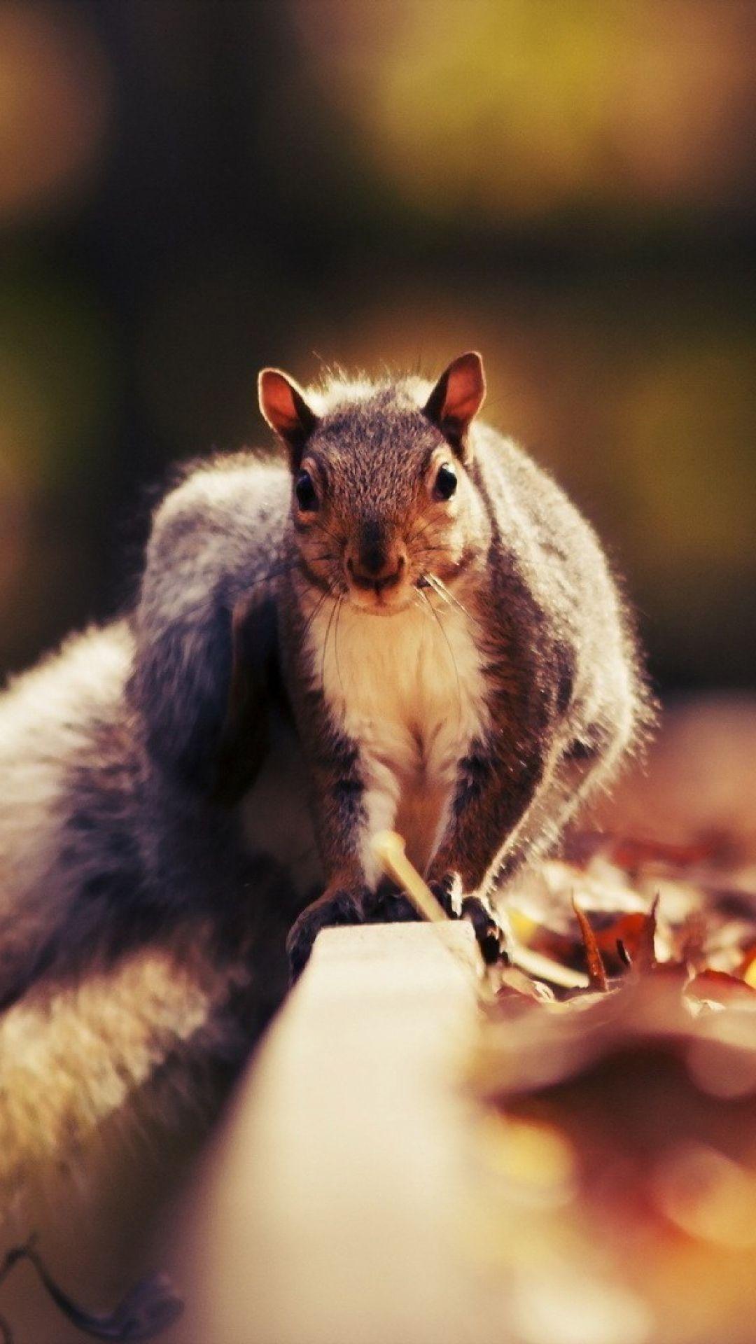 https://wallpaperscraft.com/download/squirrel_leaves_autumn_animal_66502/1080x1920