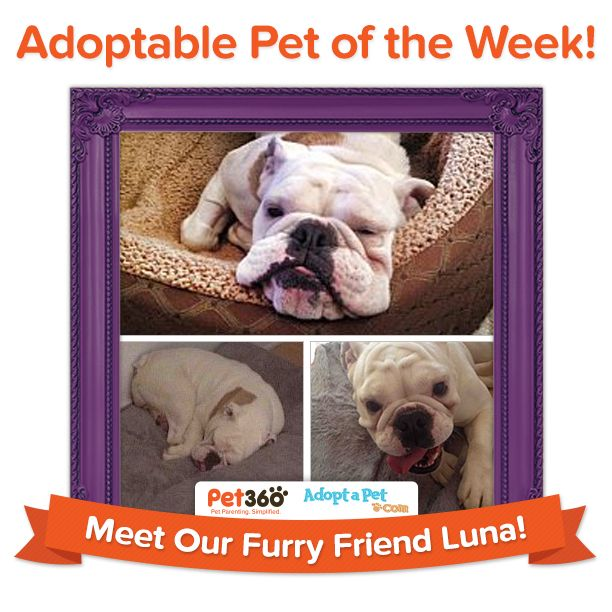 This Forever Friend In Waiting Is Luna In Chicago Illinois Luna