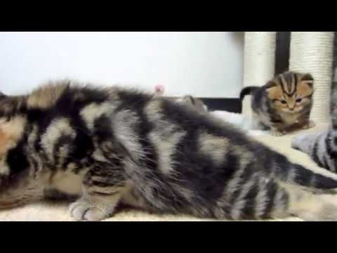 Mom Cat talking to her Kittens  20 min video with Relax Music   YouTube 360p - http://www.gigglefinger.com/mom-cat-talking-to-her-kittens-20-min-video-with-relax-music-youtube-360p/