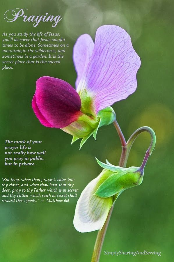Simply Sharing Health Home Remedies And Encouragement Sweet Pea Flowers Pea Flower Amazing Flowers