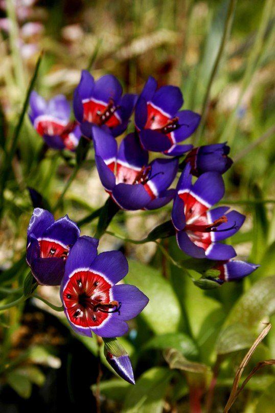 Encyclopedia of Flowers / Энциклопедия Цветов