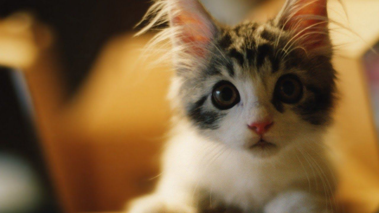 Cute funny kittens pilation SUBSCRIBE