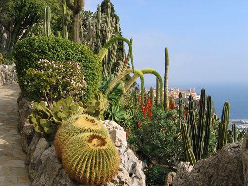 Jardin Exotique De Monaco 62 Boulevard Du Jardin Exotique 98000