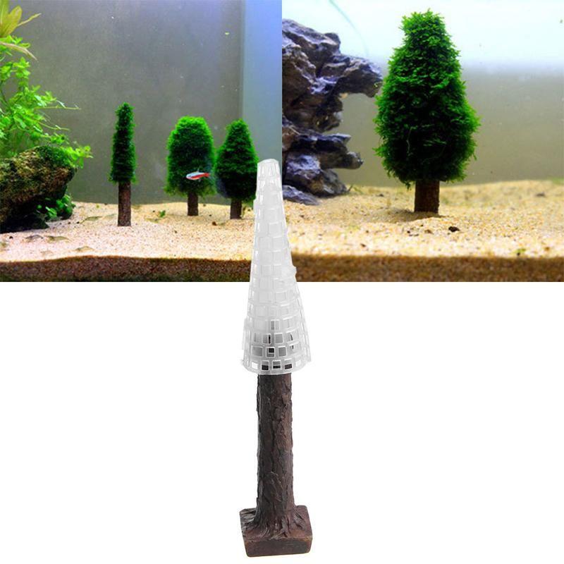 Christmas Tree Moss Aquarium: Trees To Plant, Christmas Tree Plant
