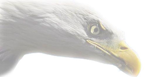 Unser Adler - weitsichtig und wissbegierig