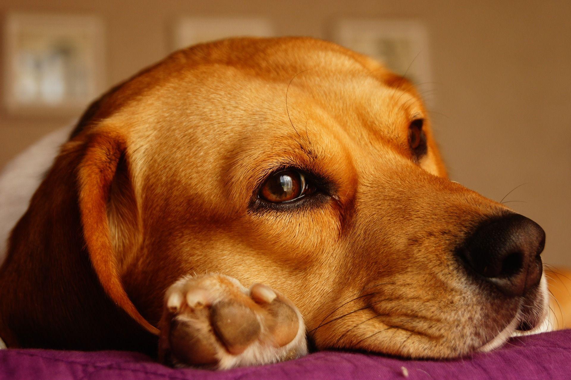 Furryfit Die Gesundheit Immer Im Blick Hunde Rassen Hunderassen Hunde