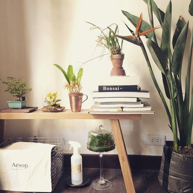 un joli bureau vgtalis avec un pot 25l bacsac gotextile qui accueille cette grande plante exotique - Grande Plante Exterieur En Pot