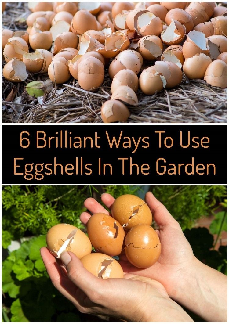 6 brilliant uses for eggshells in your garden egg shells