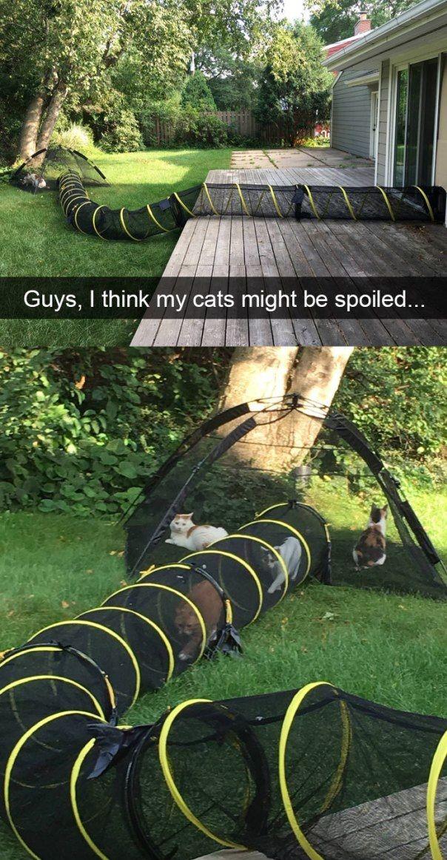AnimalsTrash Funny cat fails, Funny animals, Outdoor cats