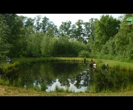 How To Build All Natural Pond Without Liner Natural Pond Pond Landscaping Pool Landscaping