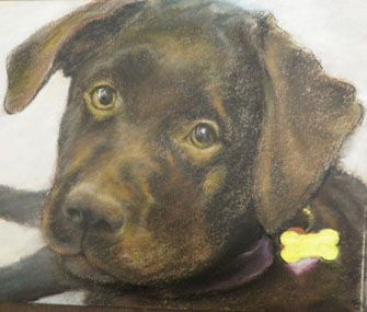 A collection of ways to remember your pet with original art