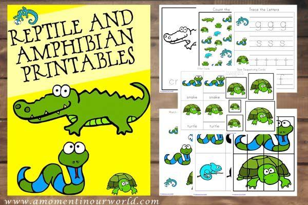 Reptiles and Amphibians Printables | Reptiles kindergarten ...