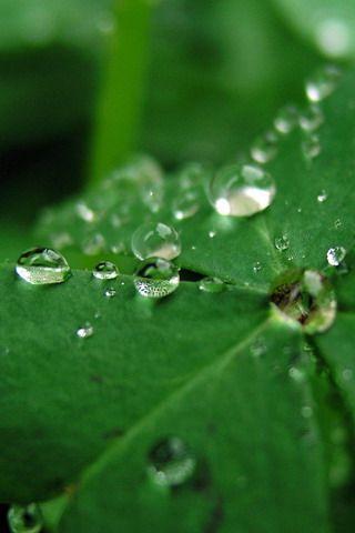 Download Green Dew Drops Iphone Wallpaper Mobile Wallpapers