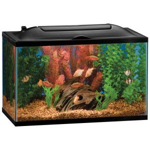 3 7 Gallon Petco Brand Tank For Our Dragonscale Betta Consisting Of Anubias Java Fern Java Moss Crypt Wendtii Amazon F Aquarium Fish Tank Betta Betta Tank