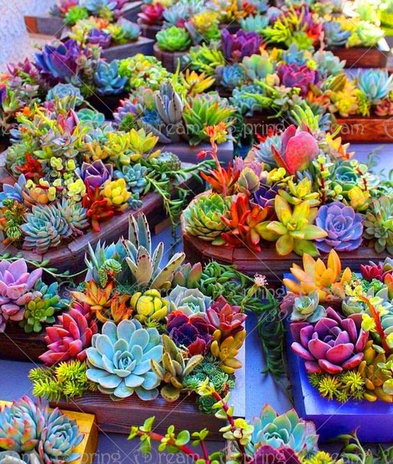 Bonsai 200seeds//bag Real Mini Cactus Rare Succulent Perennial Herb Plants