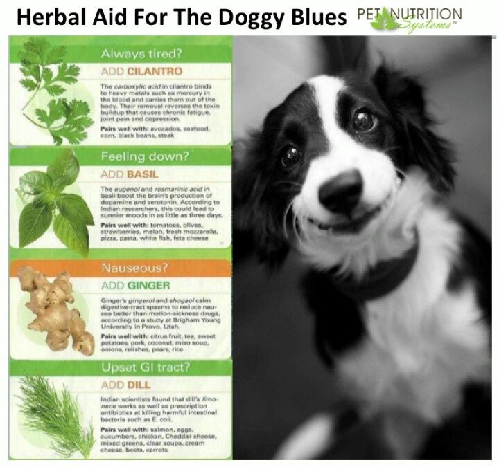 Herbal Aid For The Doggy Blues Dog Care Dogs Pets