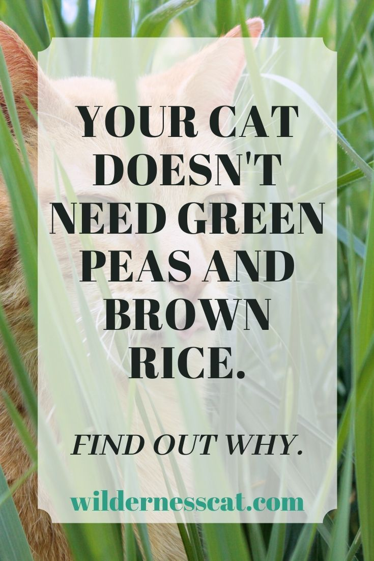 Are Cats Omnivores? Cat nutrition, Healthy cat food