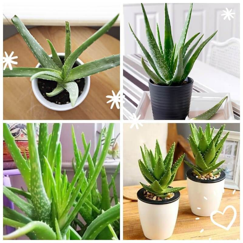 15 Most Popular Houseplants - How to Identify and Care ...