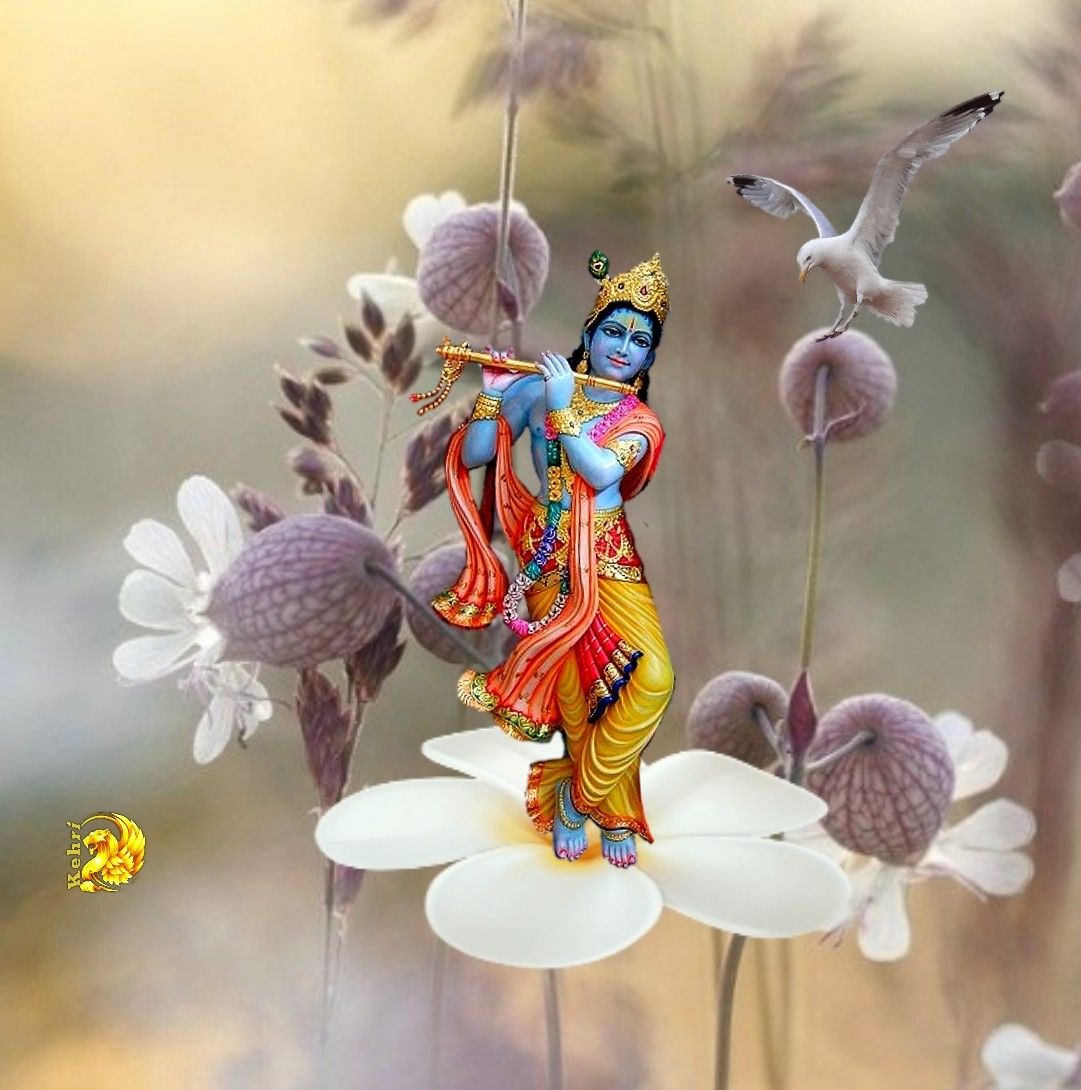 Pin by prashant on images in 2020 Good morning flowers