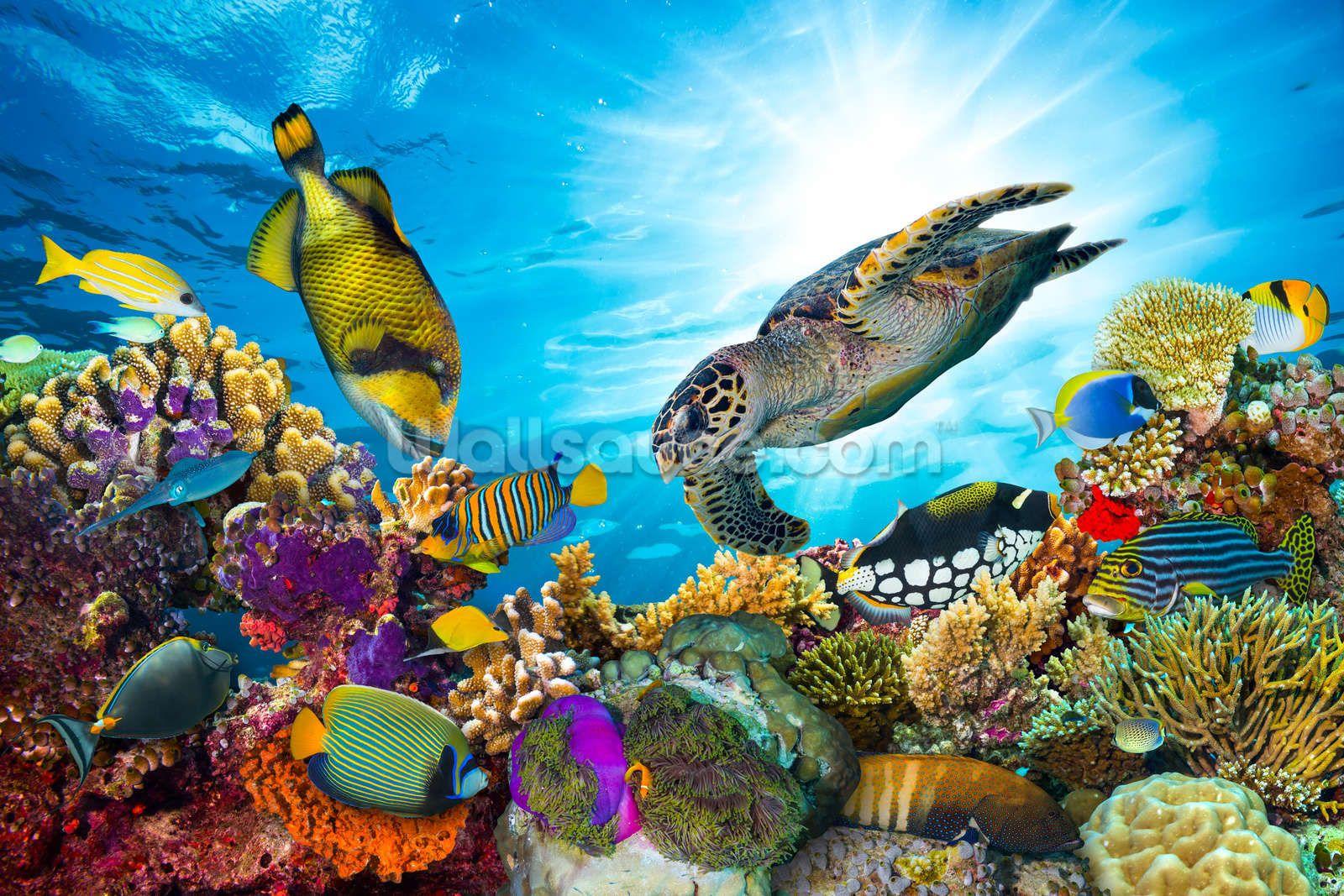 Coral Reef Diversity Wildlife Day Tropical Fish Sea Life Art