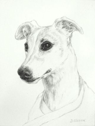 Whippet pencil drawing dog pet art portrait graphite painting by artist debra sisson