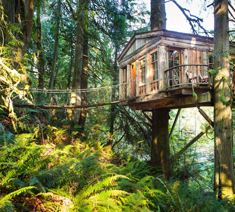 Spend a Night in a Tree House Treehouse point, Tree