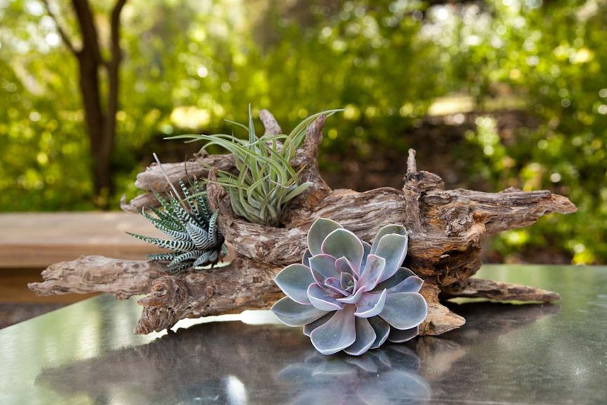 Succulent And Driftwood Wedding Cocktail Hour Table Centerpiece