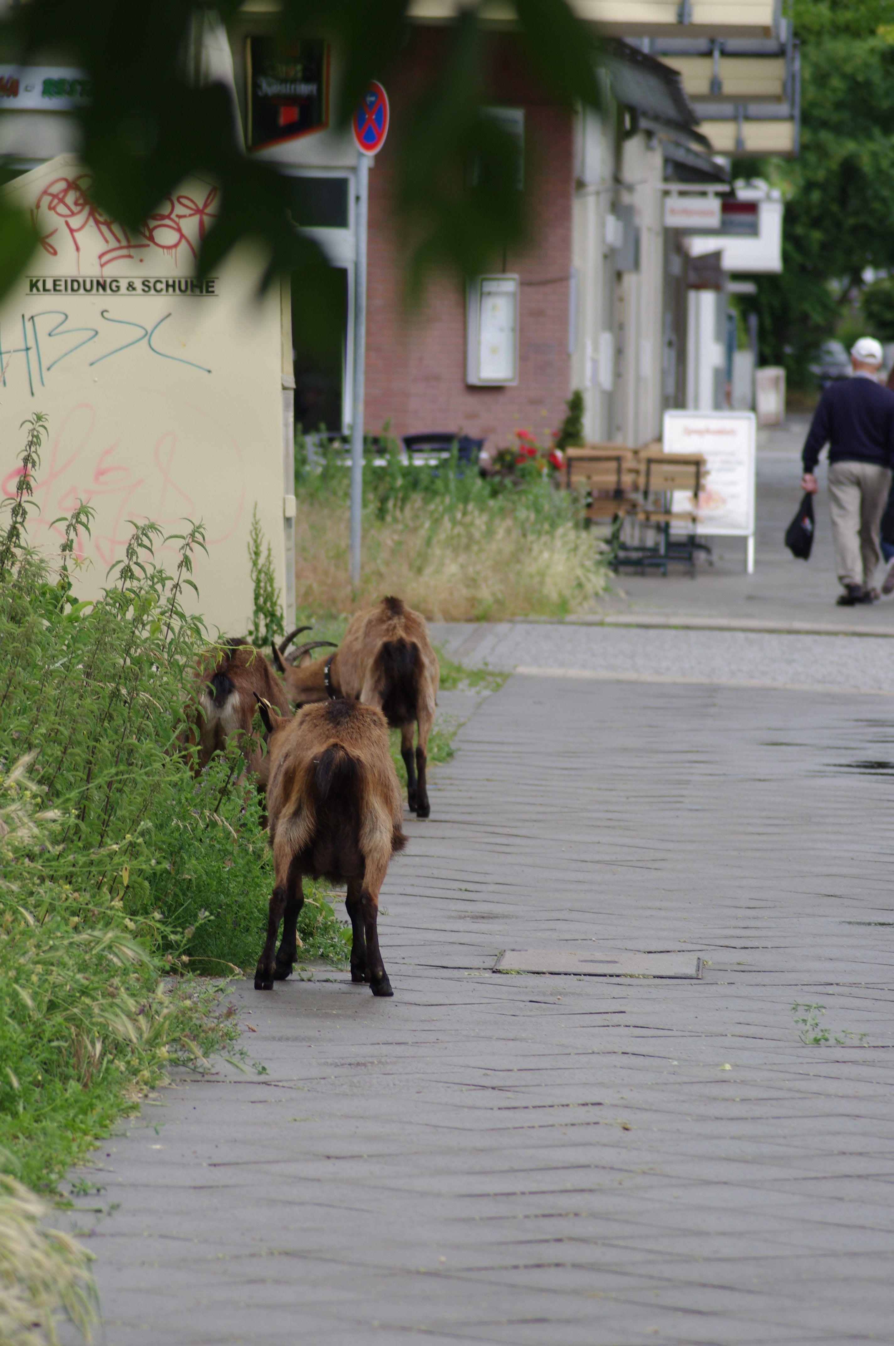 Tiere in der Stadt