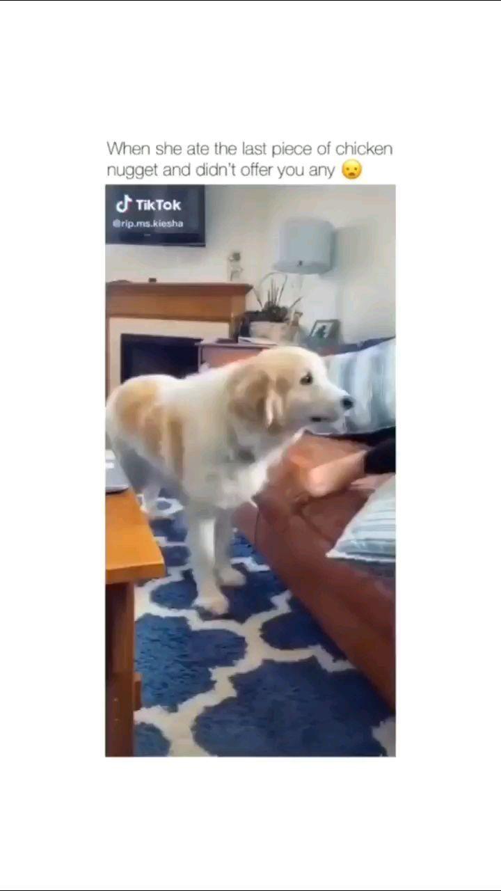 petclips15 on Instagram: 😂😂😂😂😂 #pets #petsofinstagram #dog #dogo #gooddog #pet #dogsofinstagram #funny #comedy #funnydogs #funnydog #dogs #puppy #puppylove…