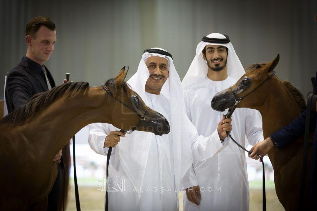 الإمارات تستعد لإقامة بطولة دبي الدولية الـ ١٤ للجواد العربي والمعرض المصاحب Horses Foals Arabian Horse