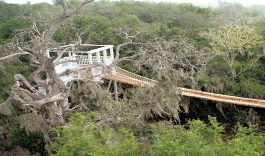 An Observation Platform Sits Above The Tree Canopy In The 2 088 Acre Santa Ana National Wildlife Refuge A National Wildlife Refuge Rio Grande Valley Santa Ana