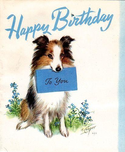 Schotse Collie Birthday Happy Birthday Dog Dog Birthday Card Happy Birthday Flower