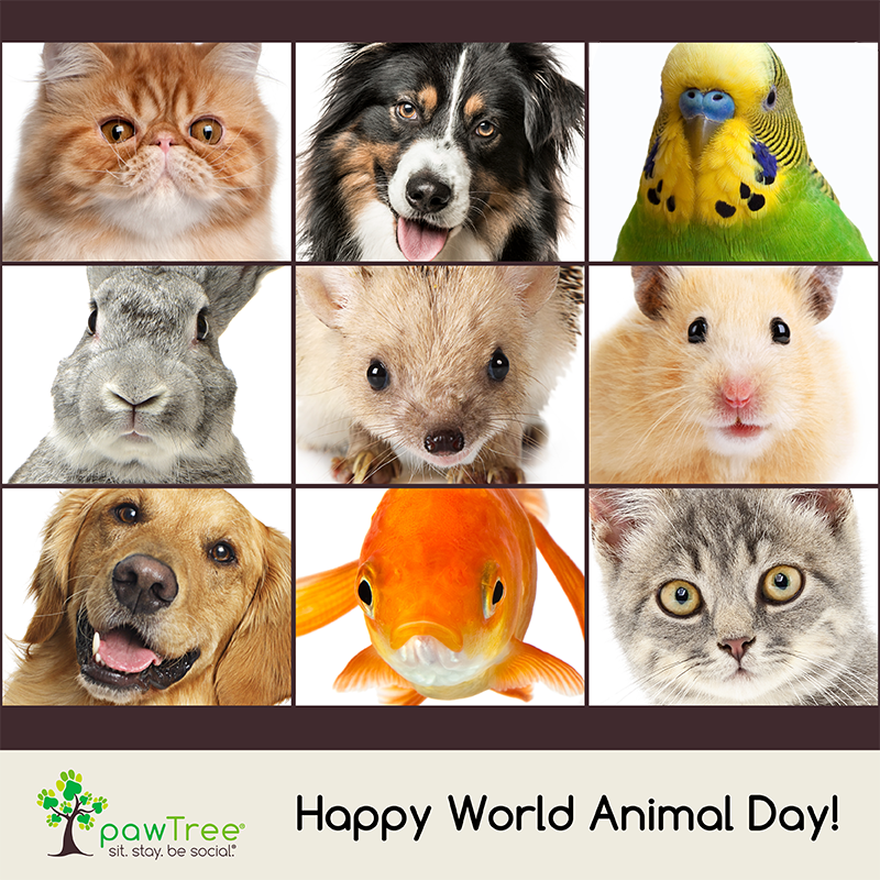 Did You Know Oct 4th Is World Animal Day Today We Celebrate All Pets Show Me Your Pics Pet Day Dog Solution Animals Of The World