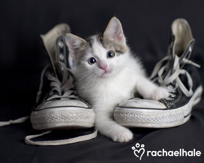 Kirby (Domestic Shorthair) - Jeepers creepers where did you get those sneakers?