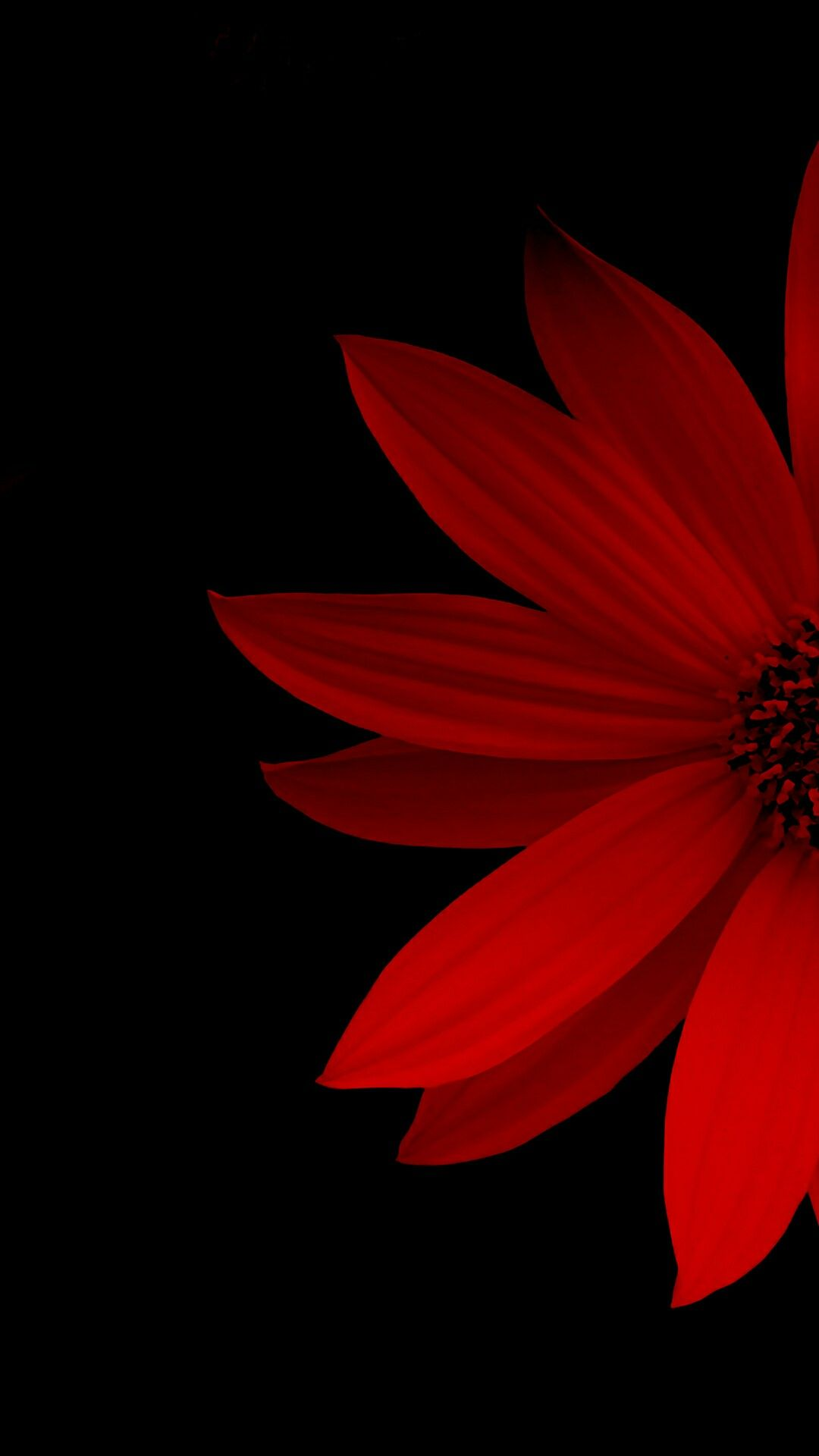 Wall Of Frame Flower Wallpaper Art Background Red Wallpaper