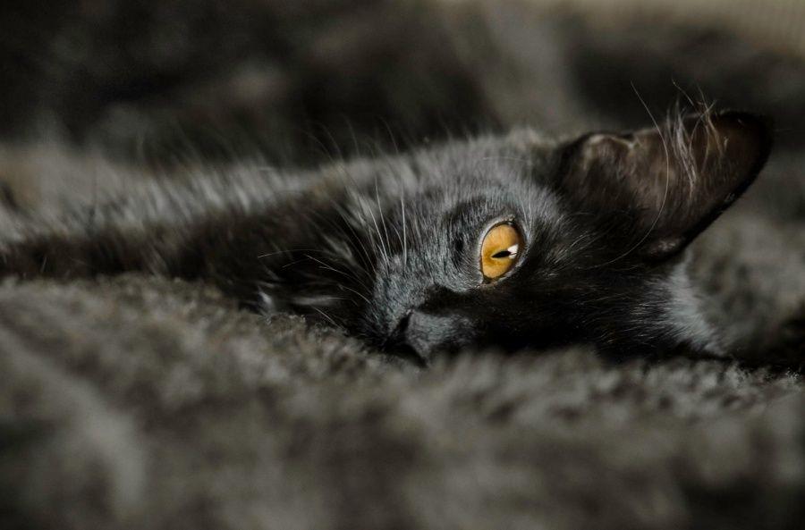 20 черных, как ночь, кошек   Черная кошка, Кошки и котята ...