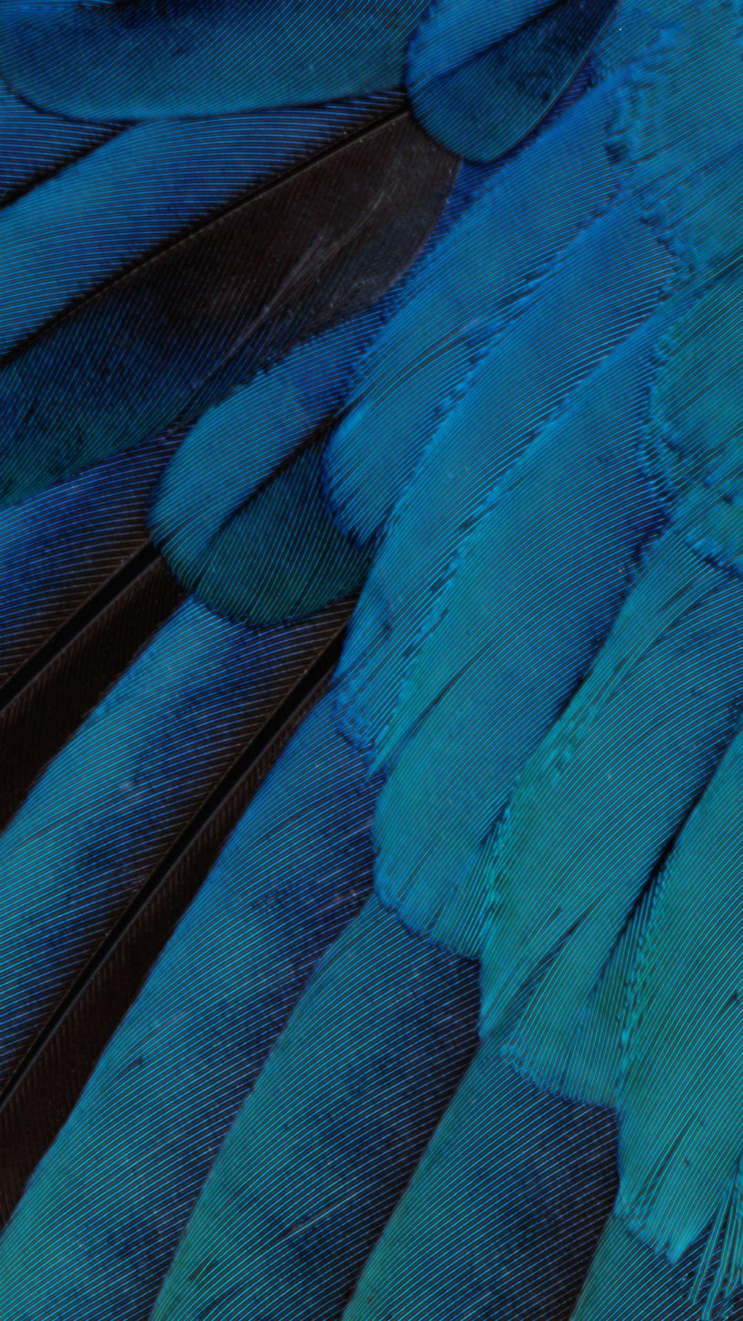 Ios9 Wallpaper Blue Feather Pattern Art Iphone 6 Wallpaper Download Iphone Wallpapers Ipad Wallpapers One Stop Download Pattern Art Blue Feather Wallpaper