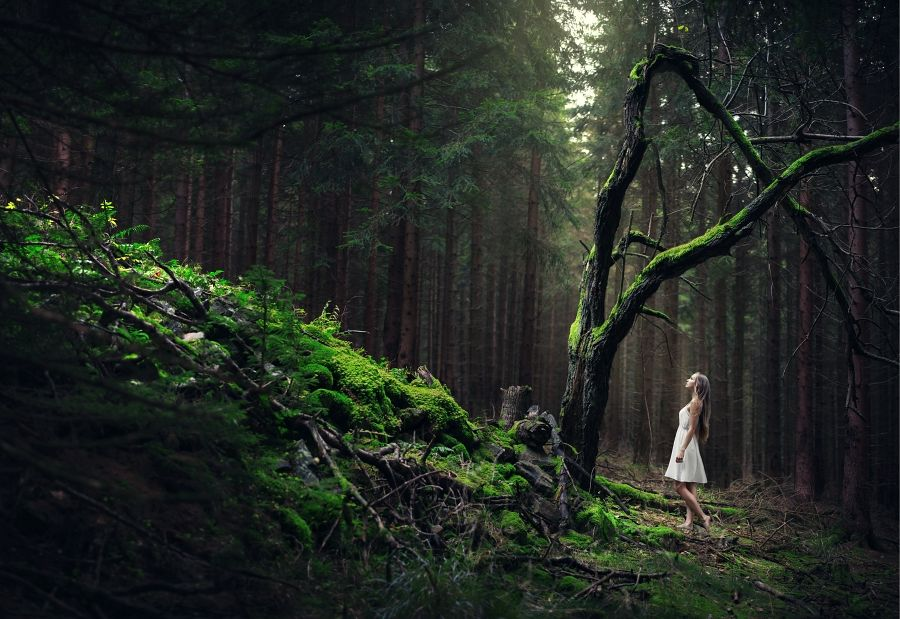 forest is an endless source of inspiration by baravavrova on DeviantArt