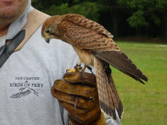 Center for Birds of Prey.   Guided walking tours of the grounds are available at 10:30 am & 2:00 pm. Buying a ticket for a tour also gives you access to the grounds for the day (10 am to 5 pm) and to our free-flight demonstrations (11:30 am and 3 pm).