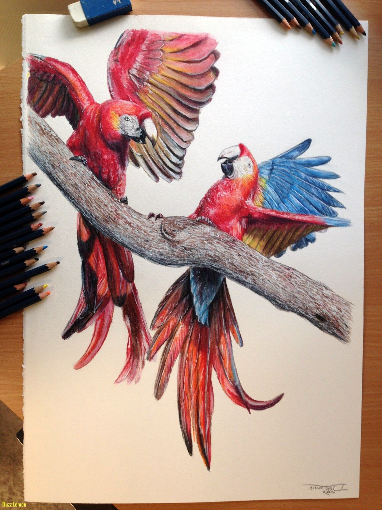 Pin by aanya singh on color pencils color pencil sketch cool